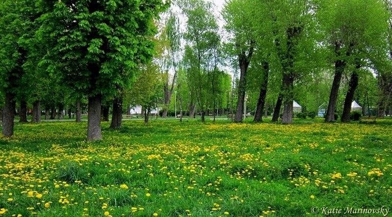 Park of Dandelions