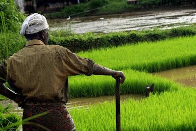 Scheme for organic farming