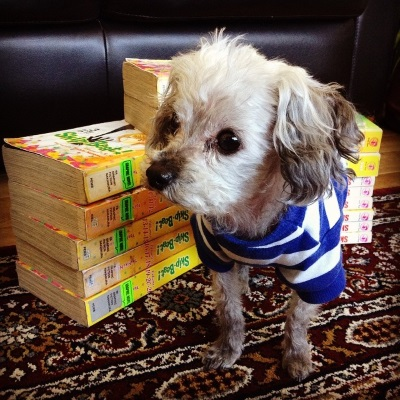Murchie, having received a shorter haircut that leaves him with longer hair on his ears and at the end of his muzzle, stands before two large piles of books with thick yellow spines. He wears a blue and white striped t-shirt.