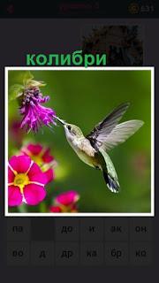 655 слов колибри прилетела к цветку розового цвета 5 уровень