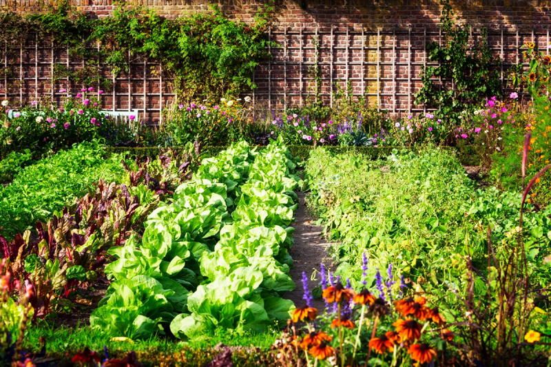 How to Care for Your Vegetable Garden During a Drought