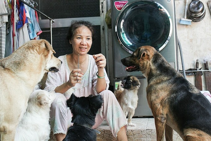 Mekong Delta woman opens heart and hearth to abandoned dogs
