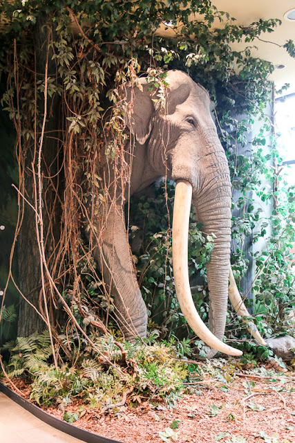 Reiss-Engelhorn-Museum, Mannheim Elefant
