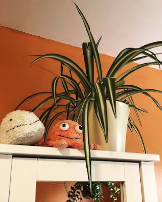 A spider plant in a white pot. The pot sits on top of a white cabinet with a mirrored door.
