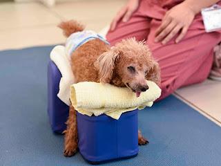 terapia do exercício em cães