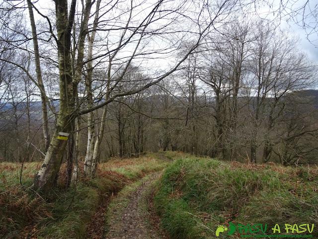 Bosque hacia Baeres