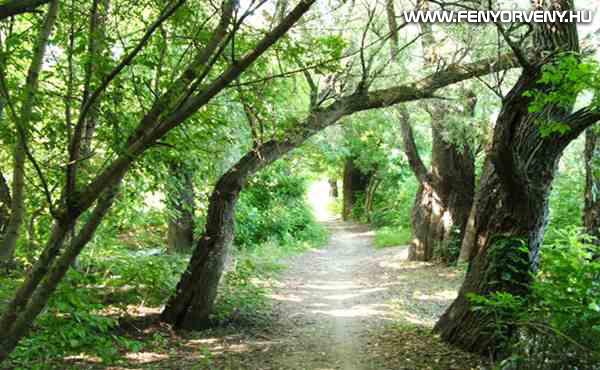 Misztikus, érdekes helyek Magyarországon