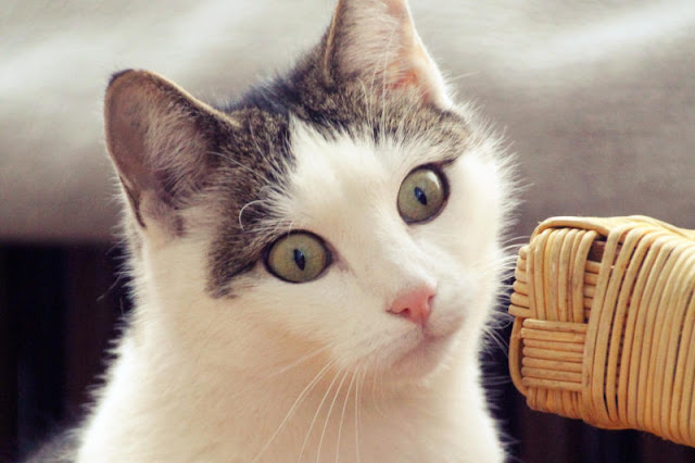 Cat Training: The 3 Common Mistakes In Dealing With Cats
