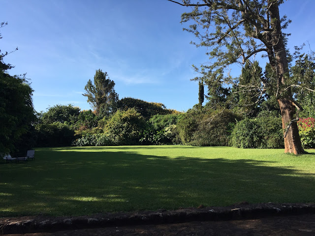 The main lawn at Huntingdon House, Satemwa tea estate, Malawi