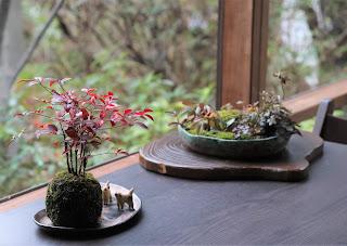 ナンテンの苔玉とリース型の鉢の草もの盆栽