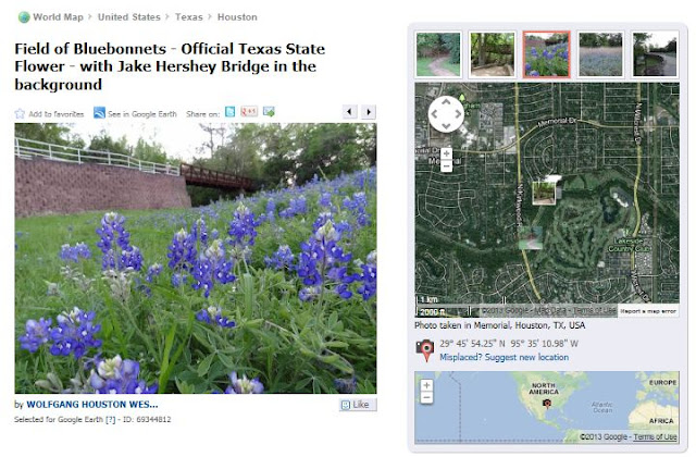 Bluebonnet site on Terry Hershey Trail in West Houston - Pic and location on map