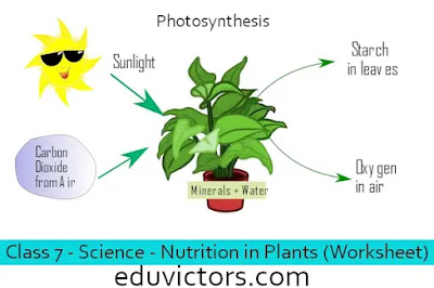 Class 7 - Science - Chapter 1:  Nutrition in Plants (Worksheet)(#eduvictors)(#cbse2020)(#class7Science)