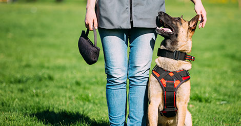 4 Tips For Picking the Right Dog Training School