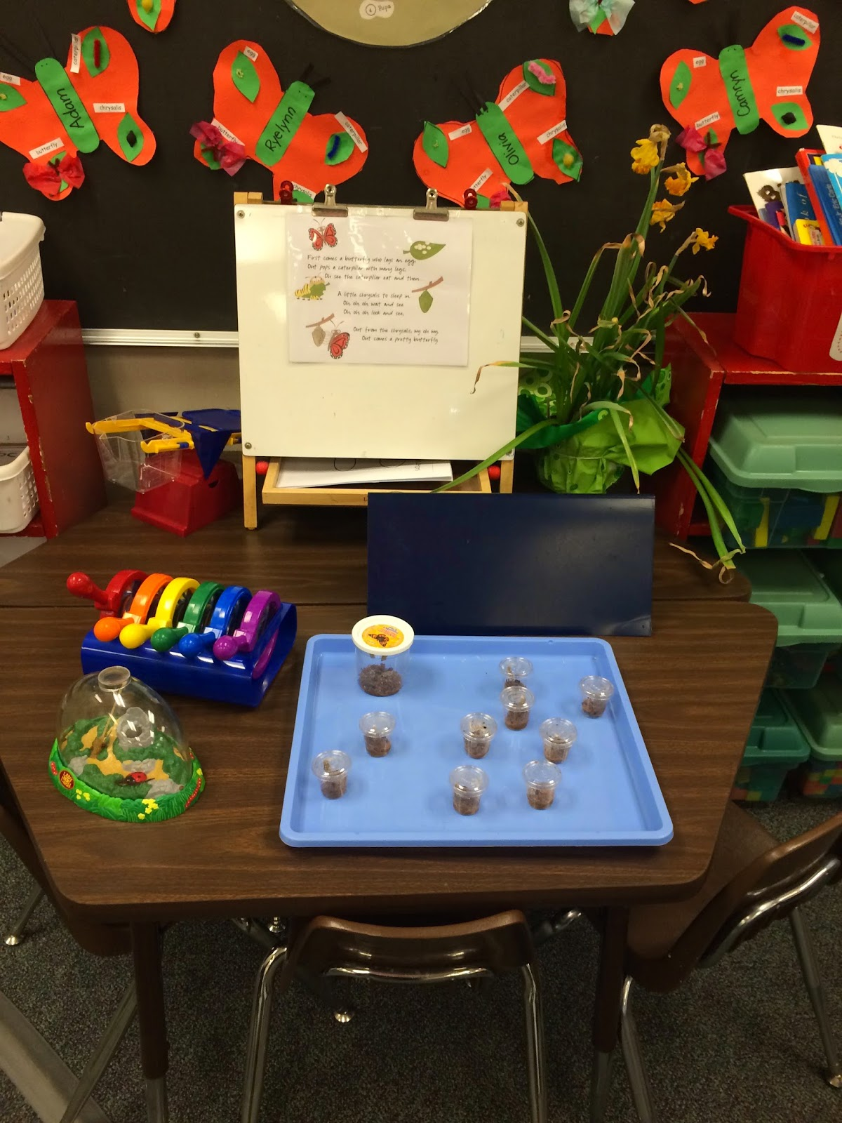 Kindergarten hands on science center