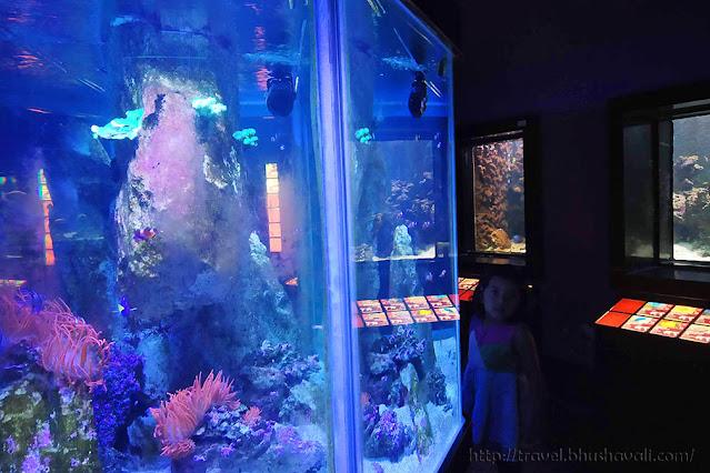 places to visit in Liege with kids Aquarium Museum