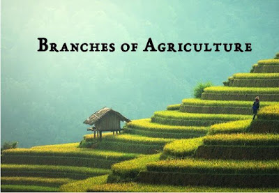 Branches of Agriculture & Farming Methodologies