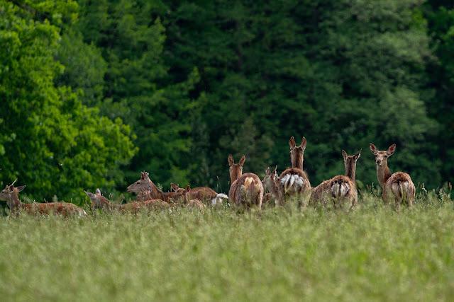 Pulvermühlenweg – Windeck | Erlebniswege Sieg | Wandern Naturregion-Sieg 04