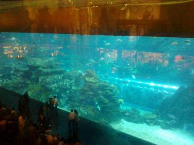 Biggest Aqurium - Inside Dubai Mall,Dubai