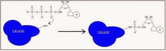 DUNIA BIOSAINS: Plasmid dan Penggunaannya dalam Rekayasa ...