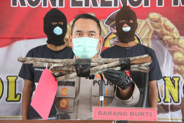 Miris, 2 Pria Ditahan akibat Curi Kayu Manis Milik Perhutani, Mencuri untuk Bertahan Hidup