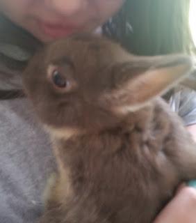 clover bunny 2
