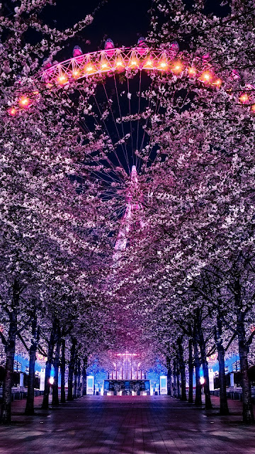Ferris Wheel Cherry Blossom Tree Wallpaper