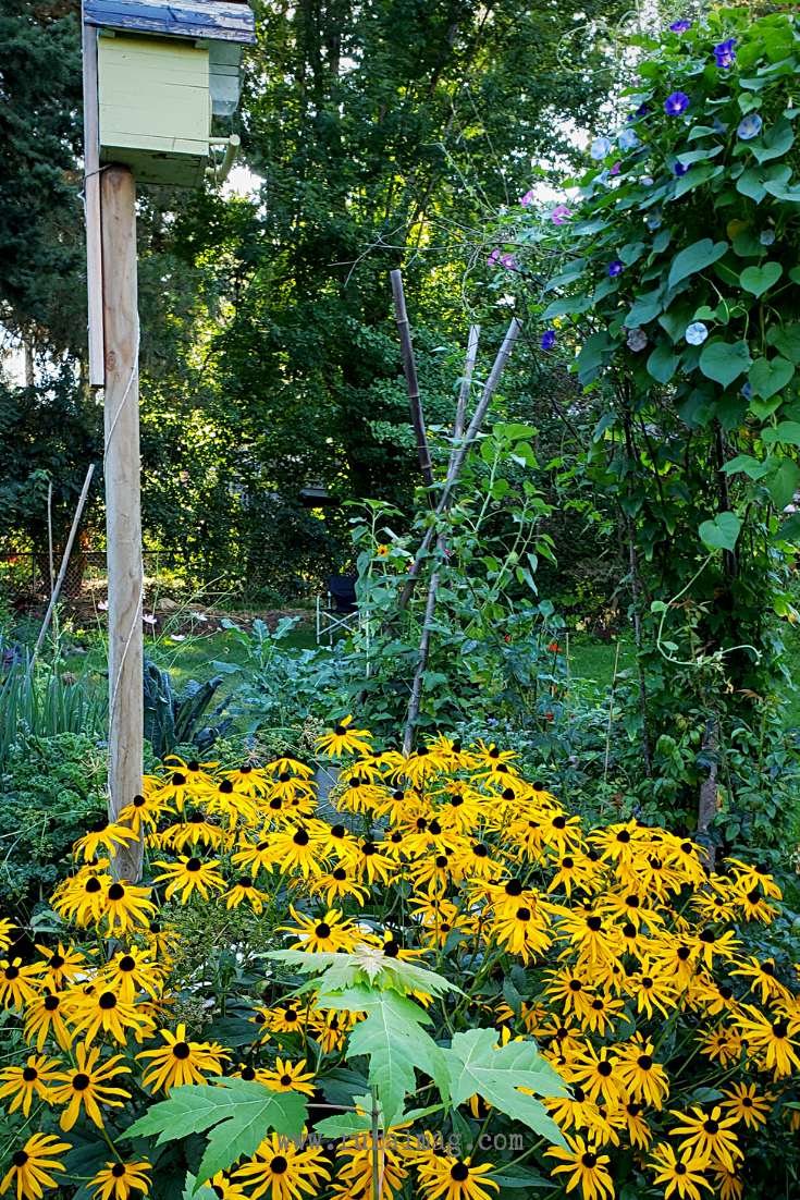 Birdhouse and black eyed susans in the garden from www.ruralmag.com