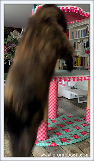 Pandora's Blurry Nosedive  ©BionicBasil® February Pet Photo Fails