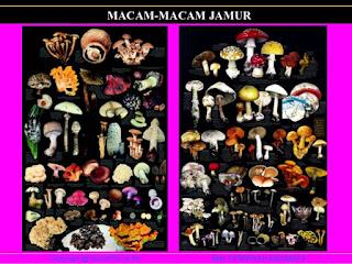 Macam Macam Jamur Paling Beracun di Dunia