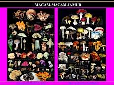 Macam Macam Jamur Yang Paling Beracun di Dunia