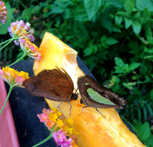 Butterfly Park in Luang Prabang