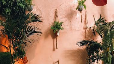 Una de instagram. Hojas verdes para la jungla urbana con folia_folia