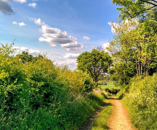 The bridleway between points 4 and 5