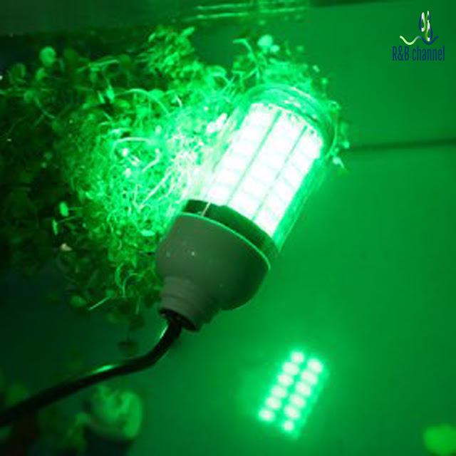 سحر الكيمياء لهب المصباح ذو اللون الأخضر