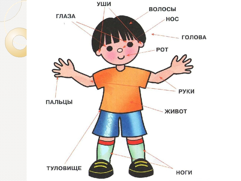 Картинки с изображением человека для детей