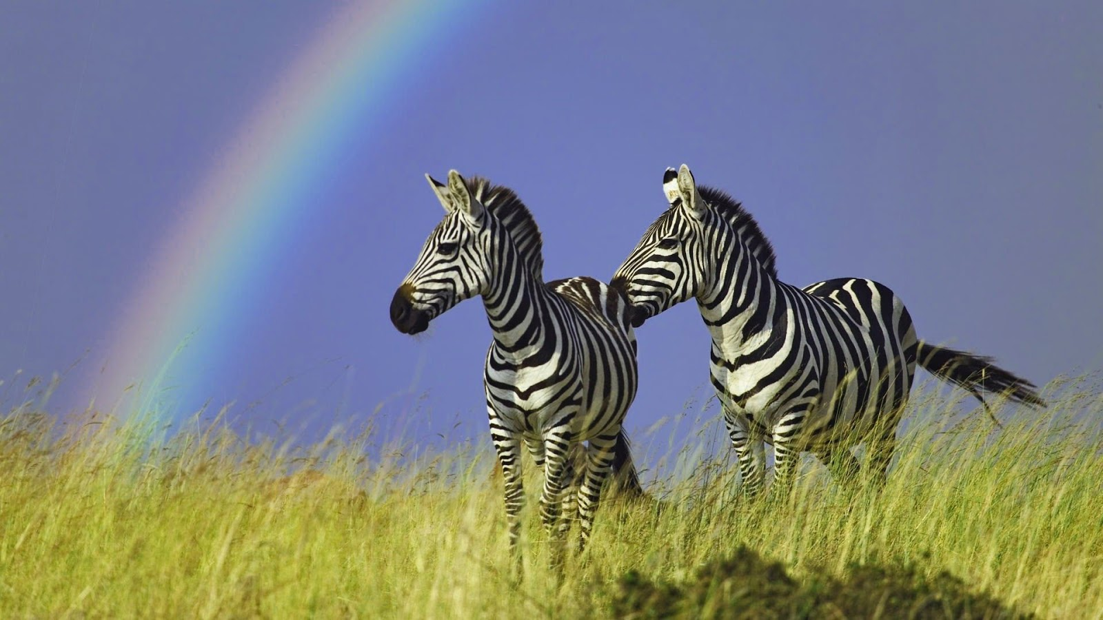 Top 20 most cute and dashing zebra wallpapers in hd - Bet wallpaper ...