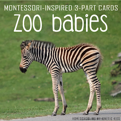 Montessori-inspired zoo babies 3-part cards for sensory bins and learning, which match the Safari Ltd zoo babies toob // Homeschooling My Kinetic Kids