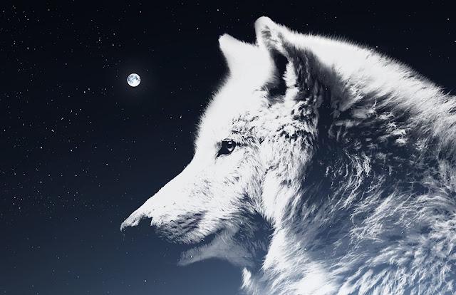 księżyc wilk noc podswiadomośc las polowanie samotność grupa przewodnik duchowy