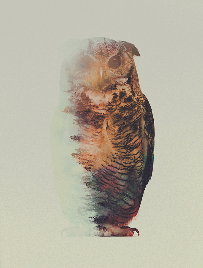 08-Owl-Andreas-Lie-Animals-in-Photographic-Double-Exposures-www-designstack-co