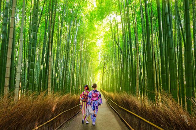 Sagano Bamboo Forest, Jepang