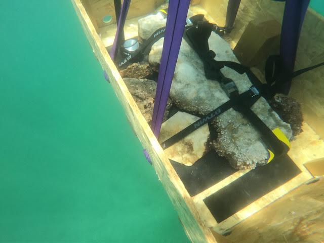 Νέα ανακάλυψη στο υποβρύχιο πάρκο της Baia