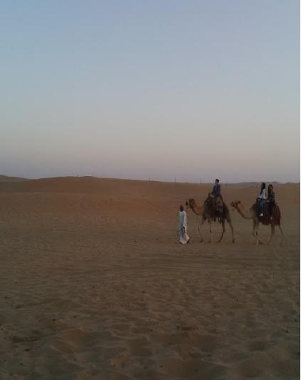 Abu Dhabi Camel Ride