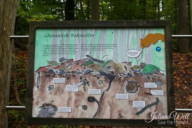 Waldlehrpfad Edersee