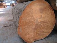 karakteristik kayu bengkirai
