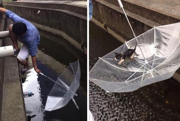 Man Saves A Drowning Kitten With An Umbrella