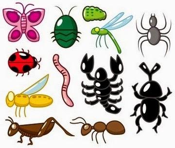 Sistem Gerak Pada Hewan Invertebrata
