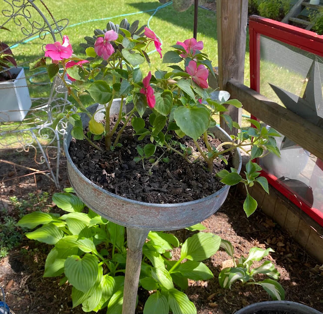 Photo of impatiens planted in a funnel