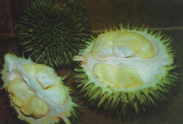 Menikmati Buah Duren Tanpa Mabuk Durian
