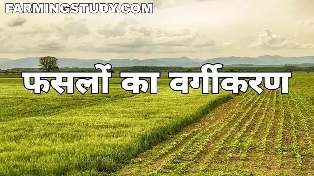 ऋतुओं, उपयोगिता, एवं आर्थिक महत्व के आधार पर फसलों का वर्गीकरण, faslo ka vargikaran, भारत की मुख्य फसलें एवं फसलों का वर्गीकरण, फसल के प्रकार, fasal