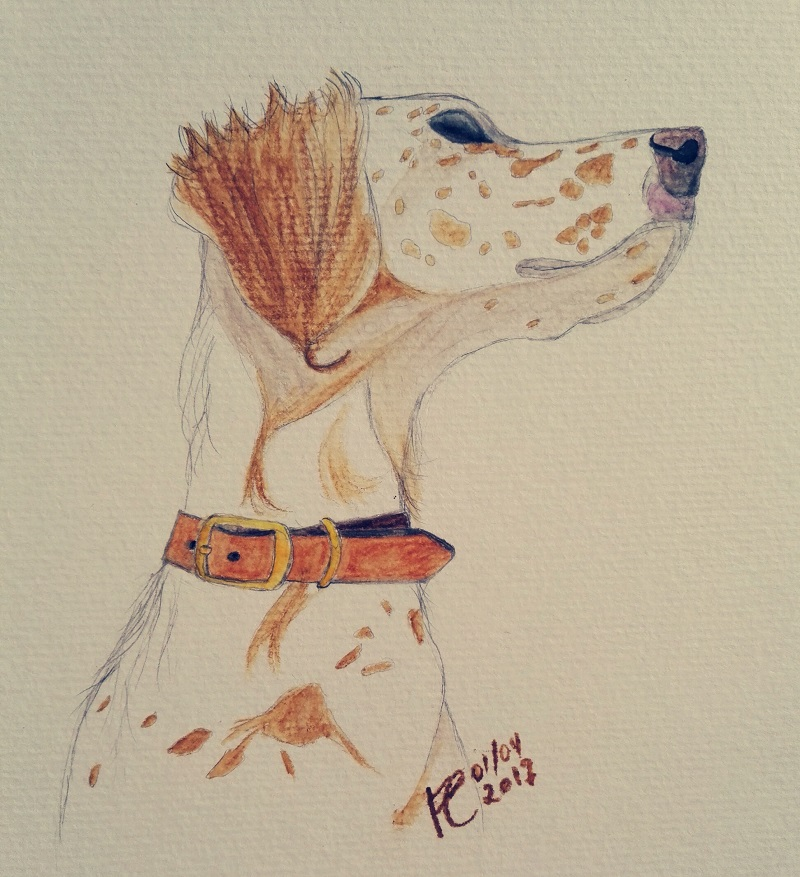 An English Setter dog watercolour portrait
